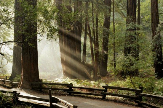Muir-Woods-National-Monument